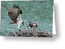 Osprey Male Bring Home The Dinner Greeting Card
