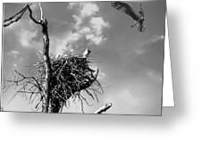 Osprey Nest Greeting Card
