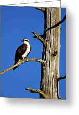 Osprey Nest Guard - 001 Greeting Card