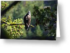 Osprey On Branch Greeting Card