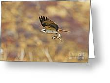 Osprey On The Wing With Fish Greeting Card