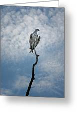 Osprey On Top Of The World Greeting Card