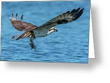 Osprey Ready For Fish Greeting Card