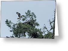 Osprey Reinforcing Its Nest 2017 Greeting Card