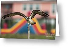 Osprey Salutes The Busch Eagle Greeting Card