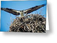 Osprey Wingspan Greeting Card