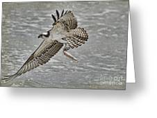 Osprey With Breakfast Greeting Card