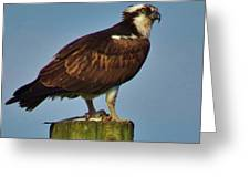 Osprey With His Catch Greeting Card