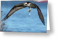 Osprey With Pin Fish Greeting Card
