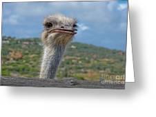 Ostrich Head Greeting Card