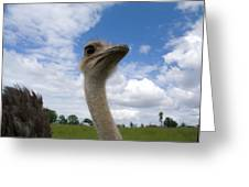 Ostrich High In The Sky Greeting Card