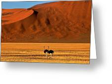 Ostriches At Sossusvlei Greeting Card