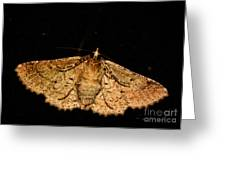 Other Side Of The Moth On The Window Greeting Card