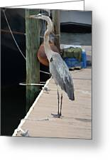 Otis..dock Of The Bay Greeting Card