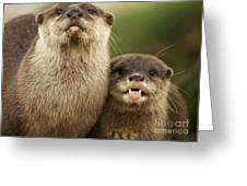 Otter And Cub Greeting Card