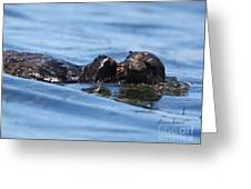 Otter Bliss Greeting Card