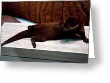 Otter Like It Greeting Card