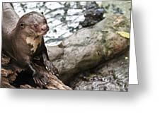 Otter Surprise Greeting Card