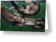 Otter Traffic Jam Greeting Card