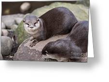 Otters In Arms Greeting Card