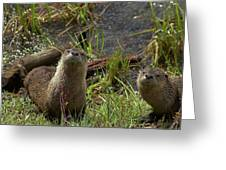 Otters Greeting Card