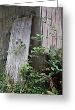 Out Back Greeting Card by Angi Parks