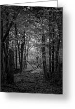 Out From The Darkness Greeting Card