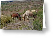 Out In The Open Range Greeting Card