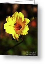 Out Of Darkness Into Light Greeting Card
