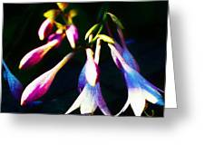 Out Of The Night Greeting Card