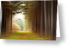 Out Of Woods Greeting Card