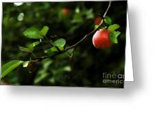 Out On A Limb  A Tempting Photograph Of A Tasty Ripe Red Apple On A Tree  Greeting Card