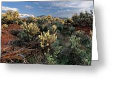 Out On The Mesa 7 Greeting Card