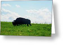 Out On The Range Greeting Card