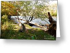 Outdoors Along The Huron River Greeting Card