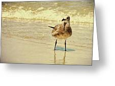 Outerbanks Gull Greeting Card
