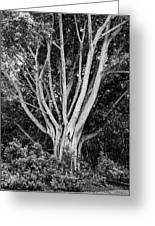 Outstretched Greeting Card