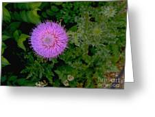Over A Thistle Greeting Card