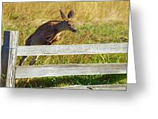 Over The Fence Greeting Card