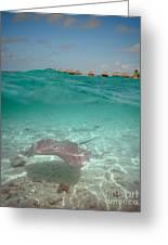 Over-under Water Of A Stingray At Bora Bora Greeting Card