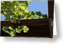 Overhead Grape Harvest - Summertime Dreaming Of Fine Wines Greeting Card