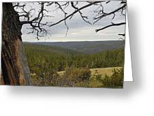 Overseeing The Canyon Greeting Card