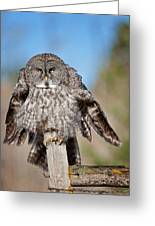 Owl 4 Greeting Card