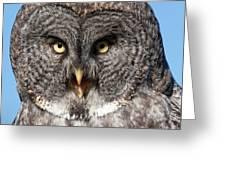 Owl 6 Greeting Card