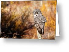 Owl 9 Greeting Card