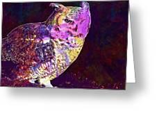 Owl Bird White Raptor  Greeting Card