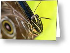 Owl Butterfly In Yellow Flower Greeting Card