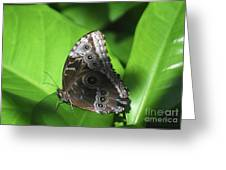 Owl Butterfly On A Cluster Of Green Leaves Greeting Card