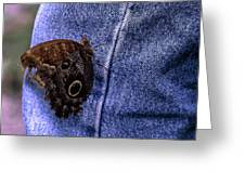 Owl Butterfly On Jeans Greeting Card