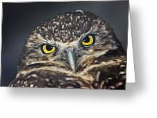Owl Face To Face Greeting Card